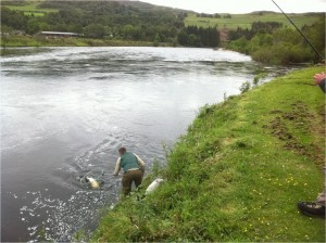 Donald Cameron playing his Salmon in The Tail of The Bridge Pool, with Colin waiting with the net 22/06/11